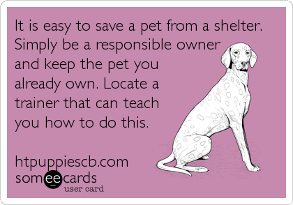 Be Responsible - Save a Pet!