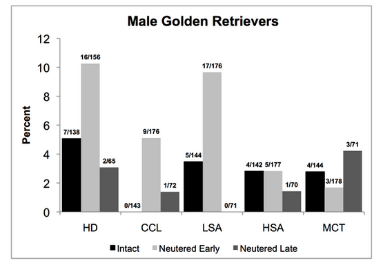 Disease and Desexing in Golden Retriever Males