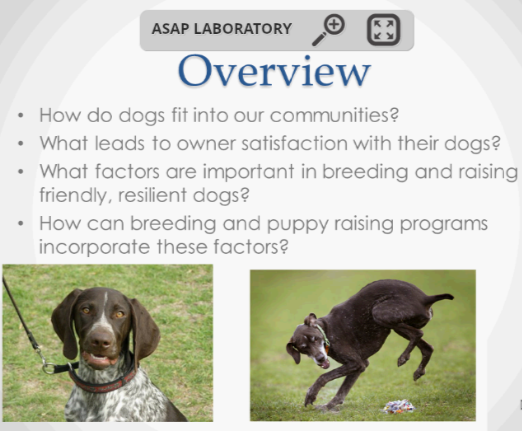 Screenshot from Breeding Better Dogs webinar.