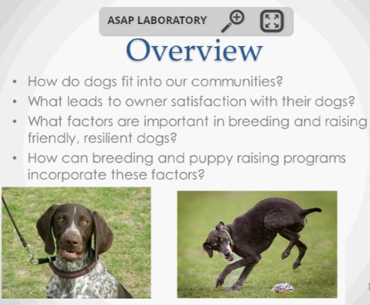 Screenshot from Breeding Better Dogs webinar.