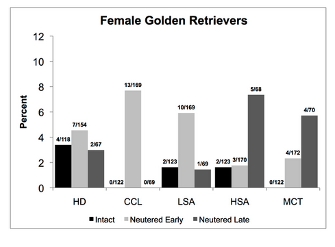 Desexing in Female Golden Retrievers