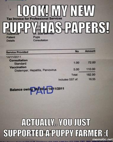 Howmuch would you pay for a purebred puppy with out papers?