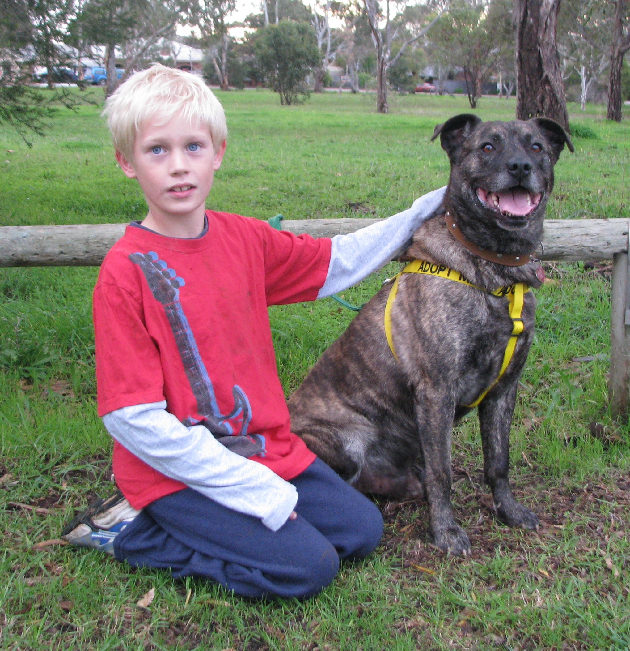 Young boy sitting with a large brindle mastiff x kelpie bull breed type dog.