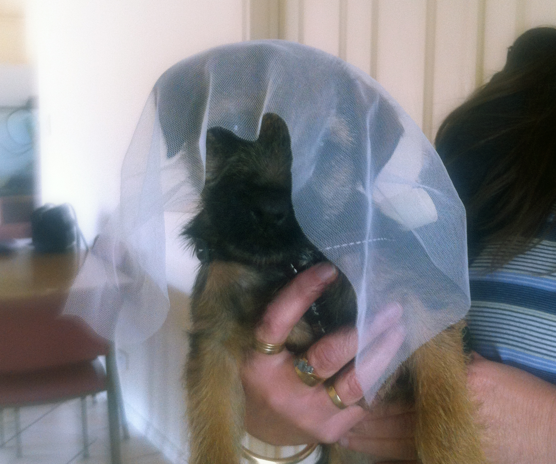 Chloe, a puppy from our last litter, had an important job being involved in a wedding proposal.