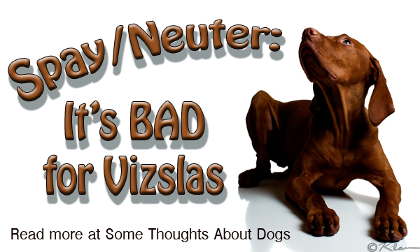 Spay/Neuter is bad for Vizslas