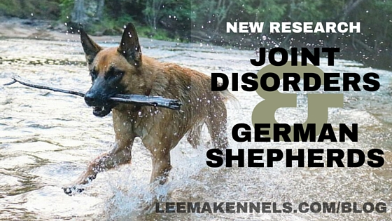 New Research on Joint Disorders in German Shepherds
