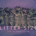 Litter Size - Can we predict it?
